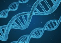 Positive and negative effects of biotechnology