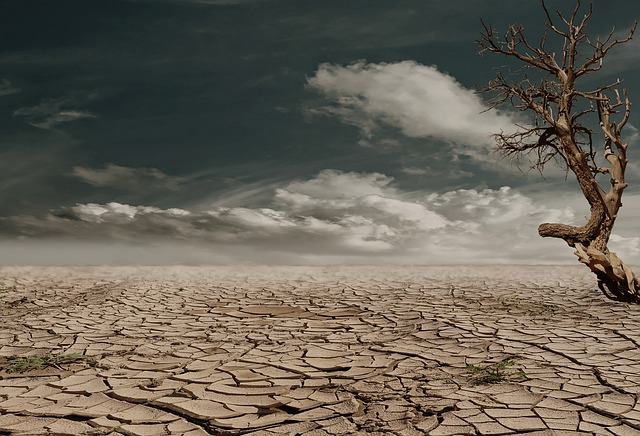 Positive and negative effects of El Nino